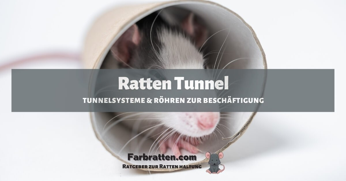 Ratten Tunnel - FB 2