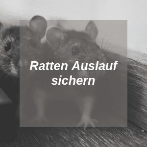 Ratten Auslauf sichern