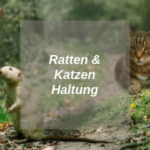 Ratten und Katzen Haltung