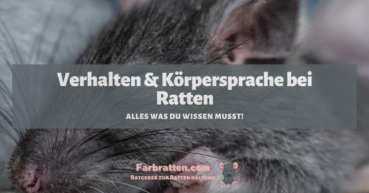 Ratten verhalten - FB 2