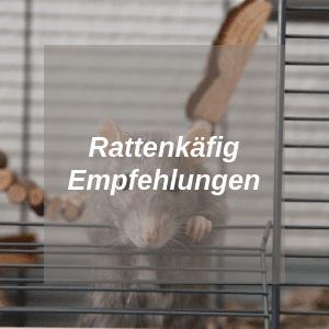 Rattenkäfig Empfehlung