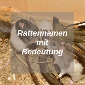 Rattennamen mit Bedeutung