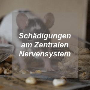 Schädigungen am Zentralen Nervensystem bei Ratten