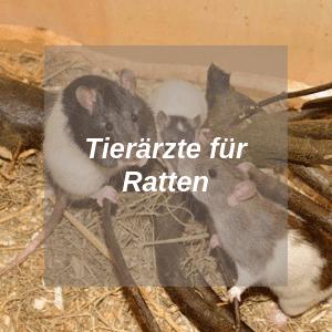 Tierärzte für Ratten