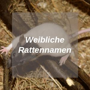 Weibliche Rattennamen