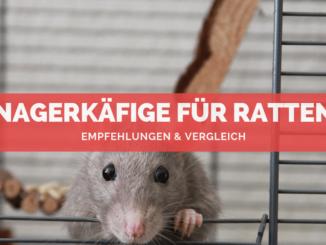 Nagerkäfige für Ratten