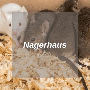 Nagerhaus für Ratten