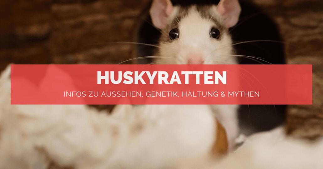 Huskyratten - FB
