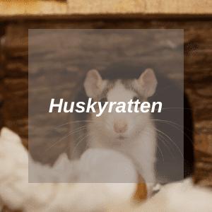Huskyratten-HUB