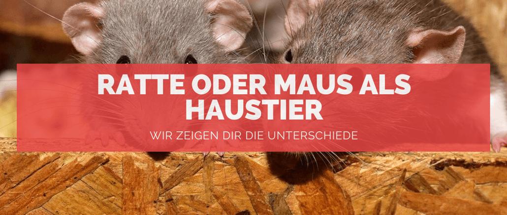 Maus oder Ratte - FB