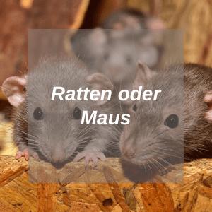 Ratte-oder-Maus-HUB