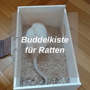 Buddelkiste-für-Ratten-Hub