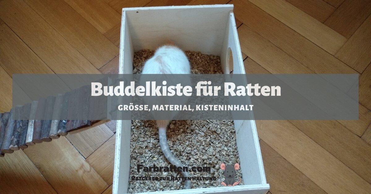 Buddelkiste für Ratten - FB 2