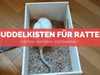 Buddelkisten für Ratten - FB