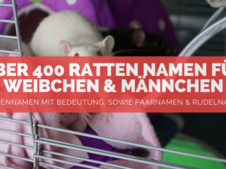 Ratten Namen - FB