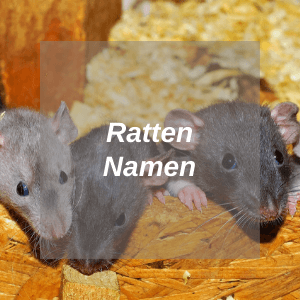 Ratten Namen