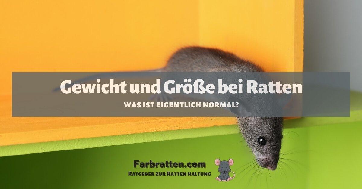 Gewicht bei Ratten - FB 2