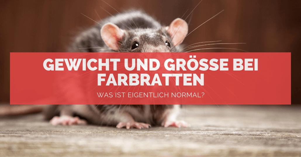 Gewicht bei Ratten - FB