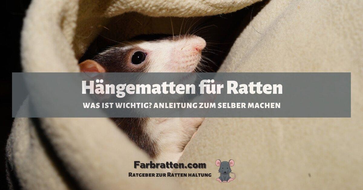 Hängematten für Ratten - FB 2