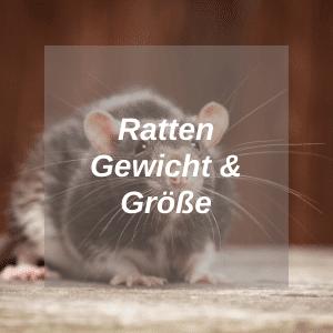 Ratten Gewicht Größe