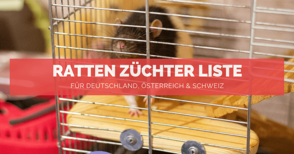 Ratten Züchter Liste - FB