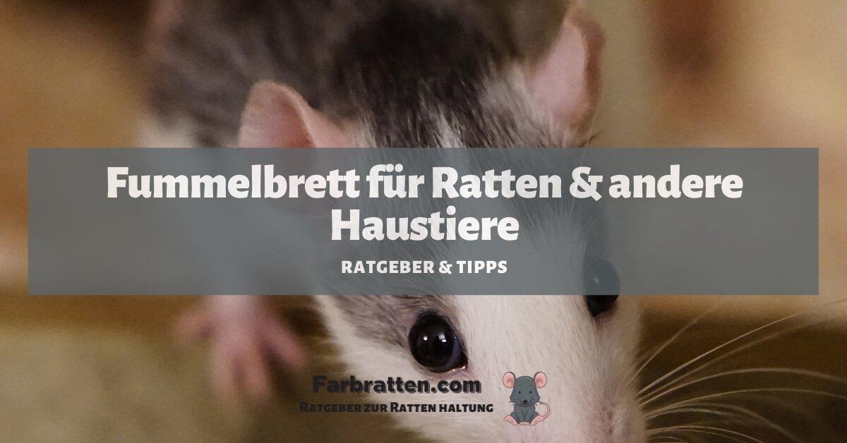 Fummelbrett für Ratten - FB 2