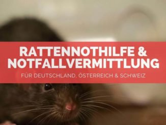 Rattennothilfe - FB
