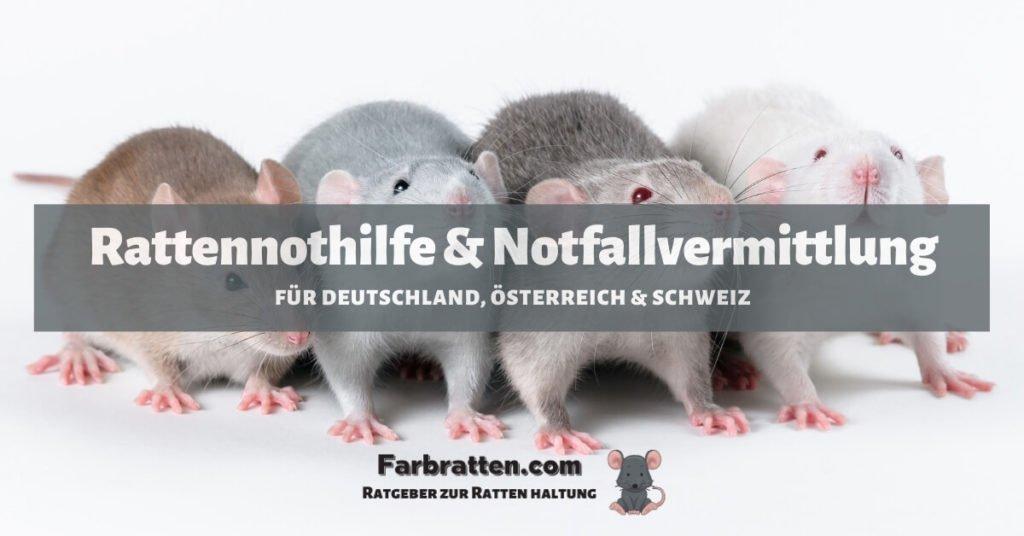Rattennothilfe und Notfallvermittlung - FB 2