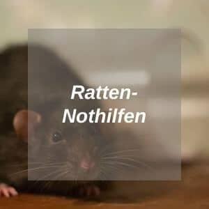 Rattennothilfen