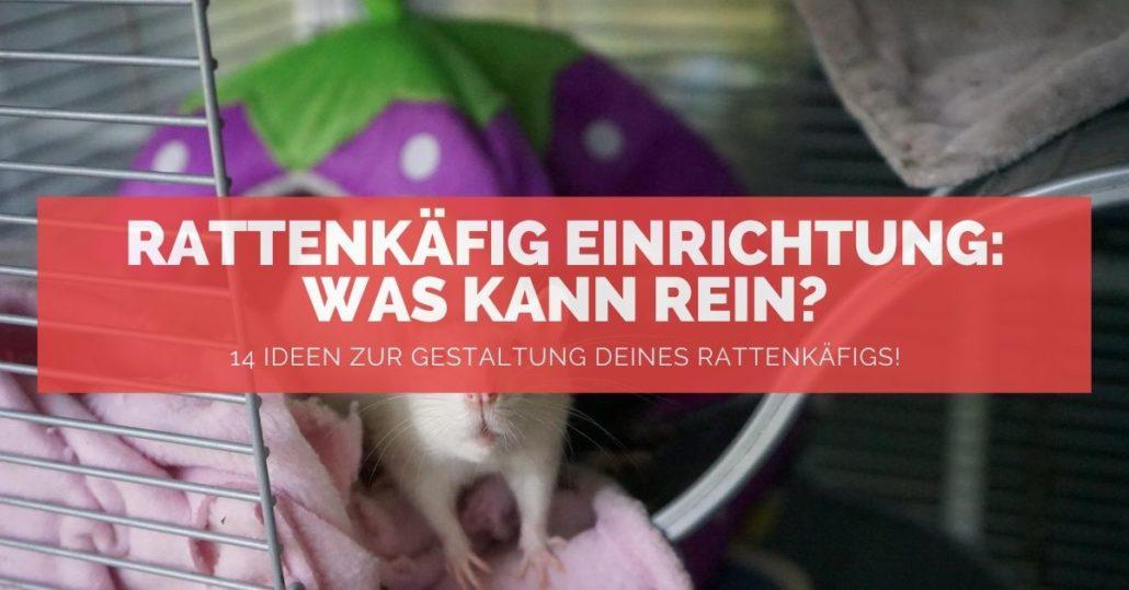 Rattenkäfig Einrichtung - FB