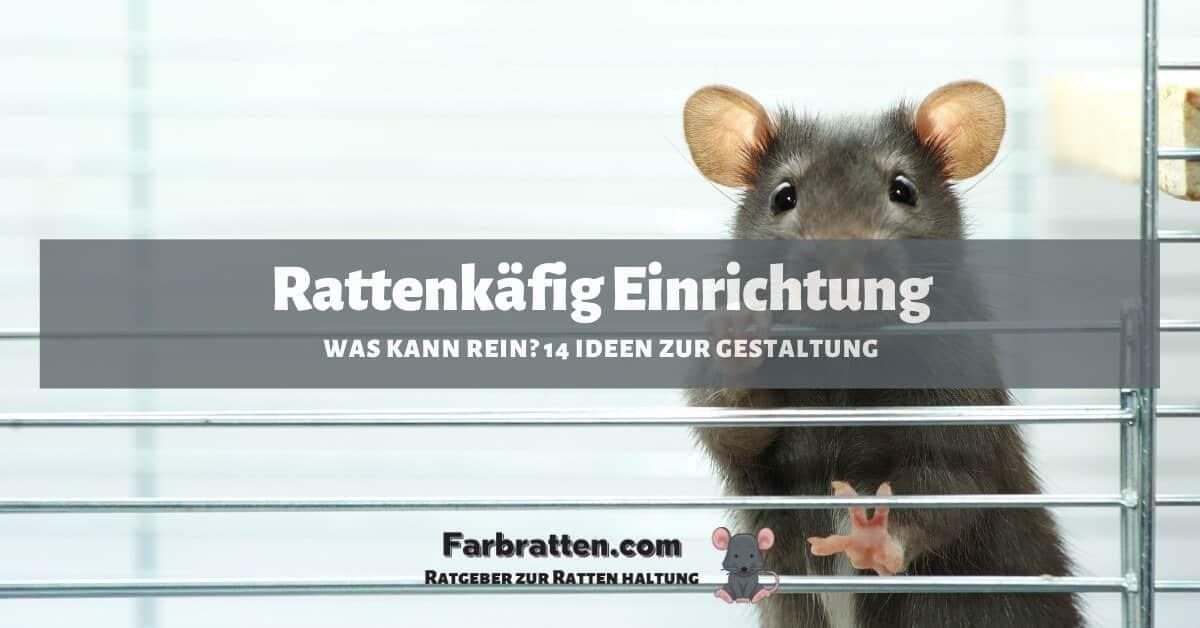 Rattenkäfig Einrichtung - FB 2