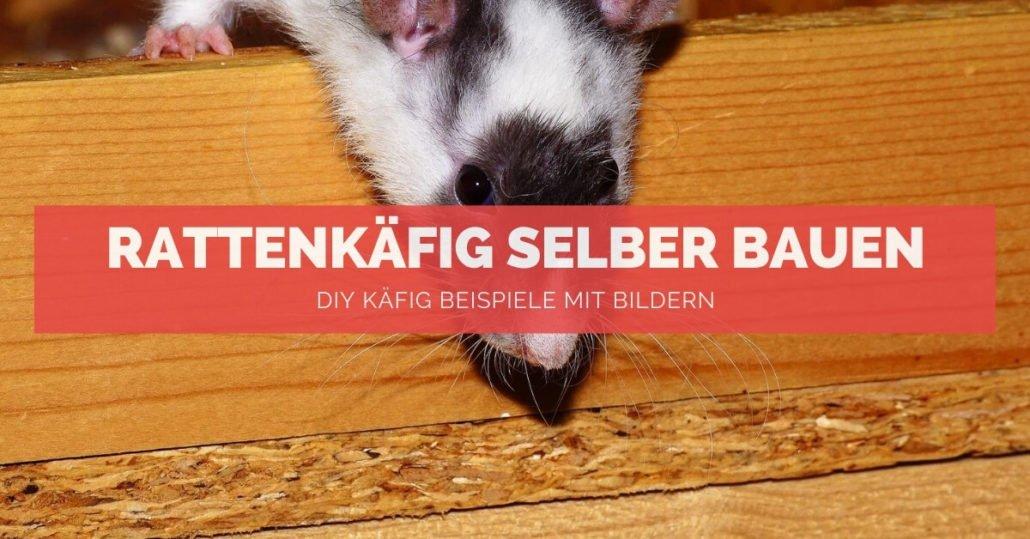 Rattenkäfig selber bauen - FB