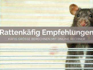 Rattenkäfig Empfehlungen - FB