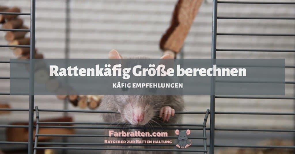Rattenkäfig Größe berechnen - FB 2
