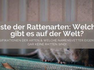 Rattenarten Liste - FB