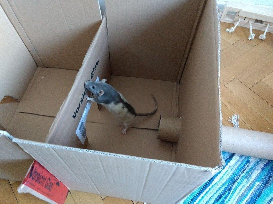 selbstgemachtes Rattenspielzeug aus Kartons und Kartonröhren gebastelt