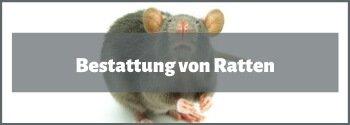 Bestattung von Ratten