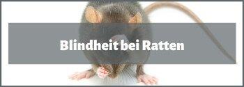 Blinde Ratten