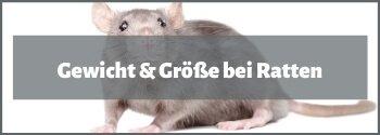 Ratten Gewicht & Größe