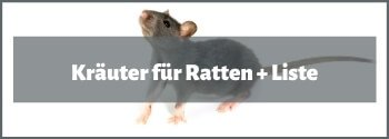 Kräuter für Ratten