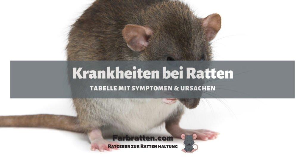 Krankheiten bei Ratten - FB 2