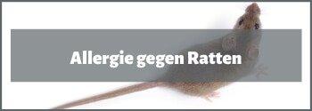 Allergie gegen Ratten