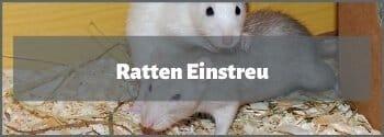 Ratten Einstreu