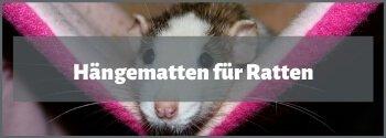 Ratten Hängematte