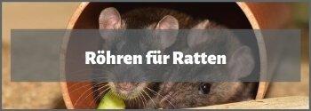 Röhren für Ratten