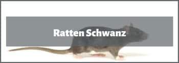 Ratten Schwanz