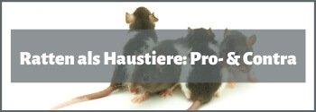 Ratten Pro- und Contra
