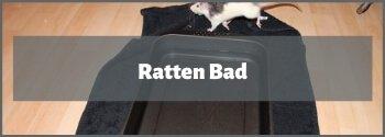 Ratten Bad