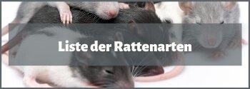 Rattenarten