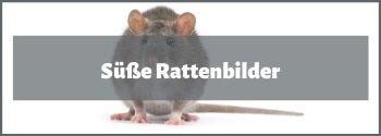 Rattenbilder